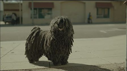 Dr Pepper – Mop Dog
